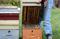 072042 - زنبورداری سری اول