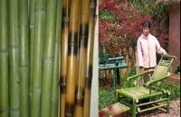 سازه ای هنرمندانه ، از چوب بامبو _ چین