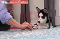 آموزش کامل تربیت سگ