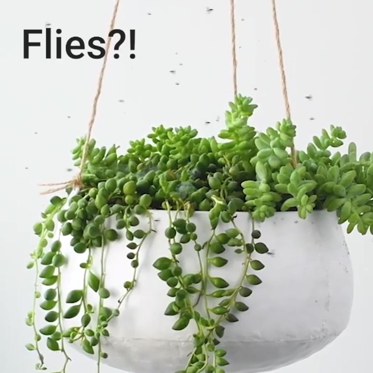 ترفند های جالب برای پرورش گل ها