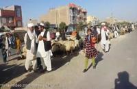 بازار داغ گوسفند زنده