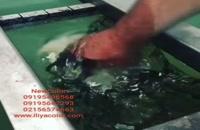 فیلم هیدروگرافیک تایوانی 09195642293 ایلیاکالر