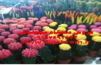 پودر مخمل در سراسر ایران 02156573155
