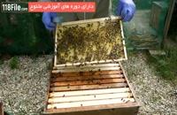 تکنیک هایی برای گرفتن بیشتر عسل از زنبوراتون