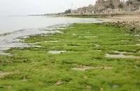 تصاویری زیبا از سواحل بکر بوشهر - أبوشهر