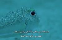 ماهی بادکنکی ژاپنی ، بزرگترین هنرمند طبیعت.