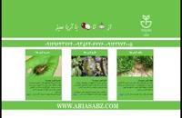 پرفروش ترین علف کش اختصاصی مزارع گندم | پسیفیکا پلاس | Pacifica Plus
