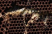 072025 - زنبورداری سری اول