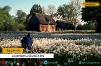 پارک ملی بیبژا لهستان، تالابی با حیوانات و پرندگان نادر - بوکینگ پرشیا bookingpersia