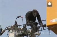حضور حیوانات در شهر