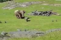 بازی این بچّه فیل بامزه را ببینید .