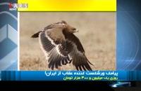 هزینه رومینگ ایران و عقابی که پژوهشگران روسی را ورشکست کرد