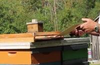 072030 - زنبورداری سری اول