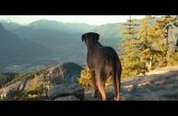 فیلم سینمایی( مسیر بازگشت یک سگ به خانه)2019