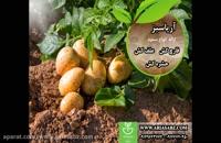 Consento | قارچ کش خارجی ضد آلترناریا در مزارع سیب زمینی