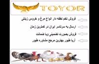 فروش تخم نطفه دار طاووس و طیور زینتی