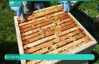 آموزش زنبور داری و پرورش زنبور عسل به صورت کامل - www.118file.com