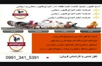 فروش تخم قرقاول و بوقلمون شرکت آسیا طیور