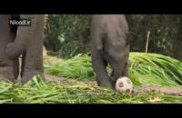 دانلود فیلم Junglee 2019 با کیفیت HD