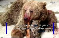 چرا توله خرس را سنگسار کردند