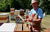 072043 - زنبورداری سری اول