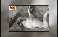 کشتار بیرحمانه سگها با تزریق سم و اسید! + فیلم دلخراش
