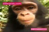 این میمون ها چه کار میکنند