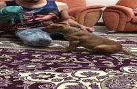 آموزش و تربیت سگ (کلیپ آموزشی)