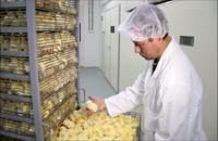 فروش انواع تخم ماکیان