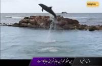 ساحل دلفین ها در کشور جاماییکا، زمانی برای آرامش - بوکینگ پرشیا