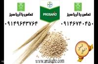 سم ویژه برای دفع قارچ به صورت تضمینی از کلزا و غلات - Prosaro