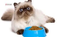 واردات یک میلیون دلاری غذای سگ و گربه در فروردینماه