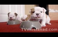 دانلود مجموعه مستند سگها و گربههای کوچولو با دوبله فارسی manoto