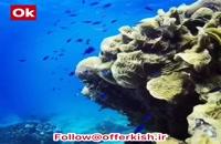 از زیبایی های جزیره مرجانی