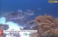صخره های مرجانی توباتا فیلیپین، دنیایی شگفت انگیز در دریای سولو - بوکینگ پرشیا