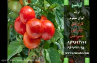 Previcur Energy | قارچ کش ویژه برای تربچه گلخانه ای