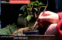 پرورش گل و گیاه زینتی زیبا در منزل