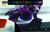 فروش مخمل پاش /محلول ابکاری 09300305408