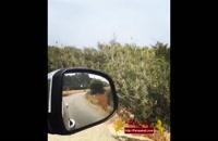 تور قبرس جزیره کارپاس  (گردشگری)
