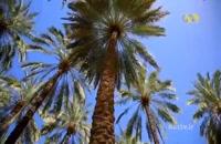 اهرم نگین تنگستان - جاذبه های گردشگری شهر اهرَم  (تفریح و سفر)