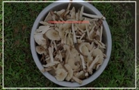 آموزش کامل پرورش قارچ  از 0 تا 100 - 09130919448