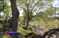 نابود کردن جنگلهای زاگرس به بهانه صید سنجاب