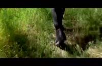 ویدیو زیبای علیرضا طلیسچی