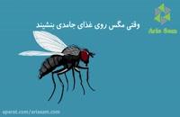 سم آجیتافلای-تنها روش تضمینی از بین بردن مگس ها