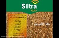 راز پنهان محصول جوی سالم، سم ضد قارچ سیلترا ایکس پرو | Siltra xpro