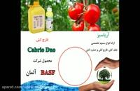 قویترین قارچ کش خارجی گوجه فرنگی | کابریودو | Cabrio Duo