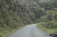 جنگل نیونگ وی در رواندا، یک پارک ملی زیبا و سرسبز - بوکینگ پرشیا