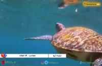 جزیره آپو فیلیپین، دهکده ماهیگران و بهشت گردشگران - بوکینگ پرشیا bookingpersia