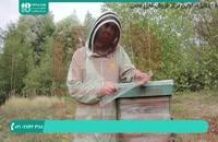 زنبورداری از مبتدی تا حرفه ای - www.118file.com