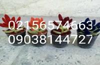 آموزش رایگان مخملپاشی 09038144727